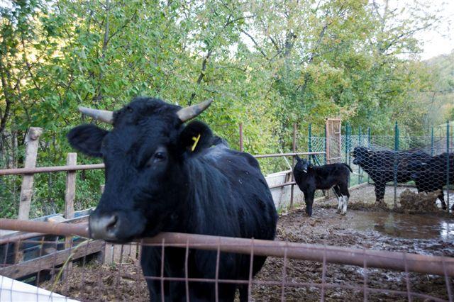 azienda-agricola-valle-tezze-9