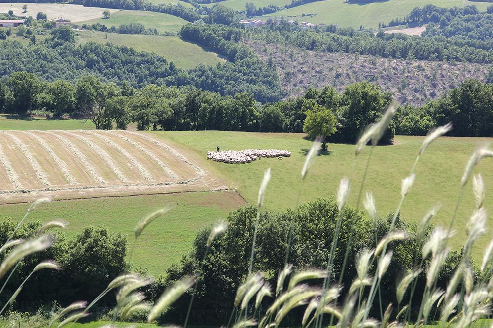 azienda-agricola-valle-tezze-cascia-1