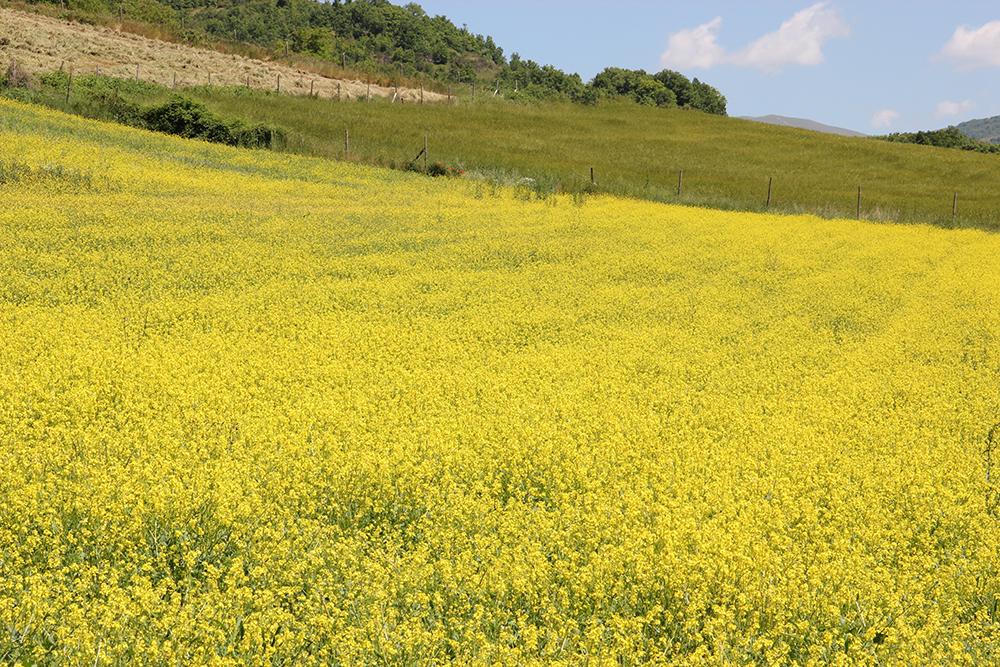 azienda-agricola-valle-tezze-cascia-5